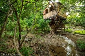 Junglehouse