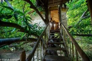 Junglehouse1